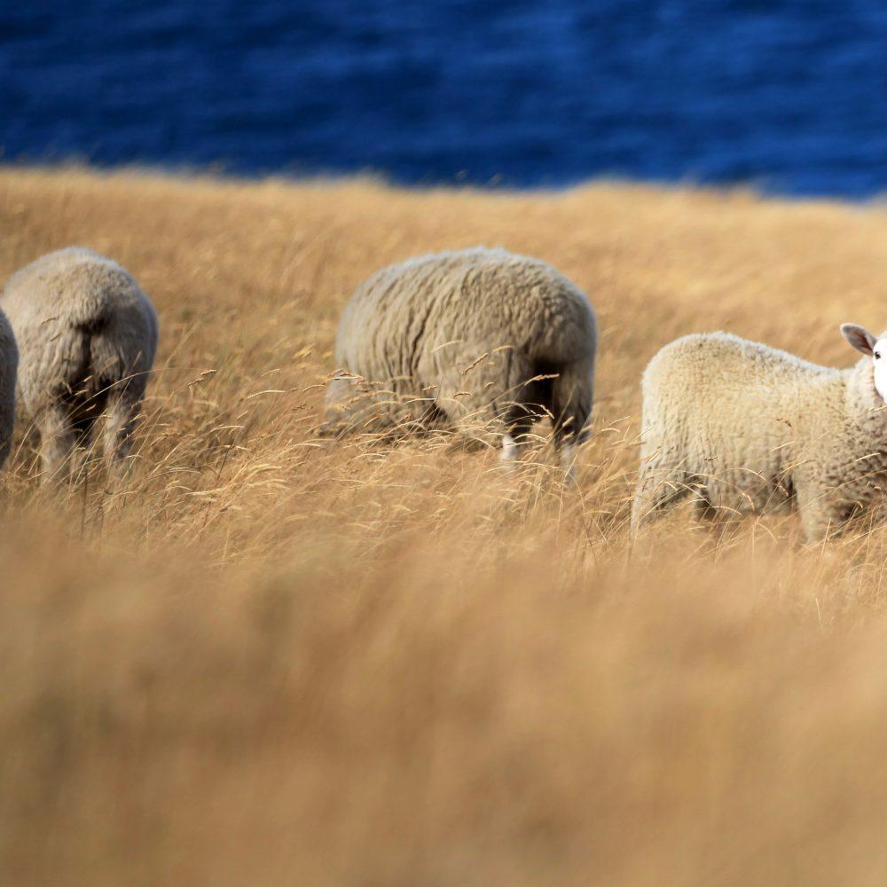 Bill Ower Livestock